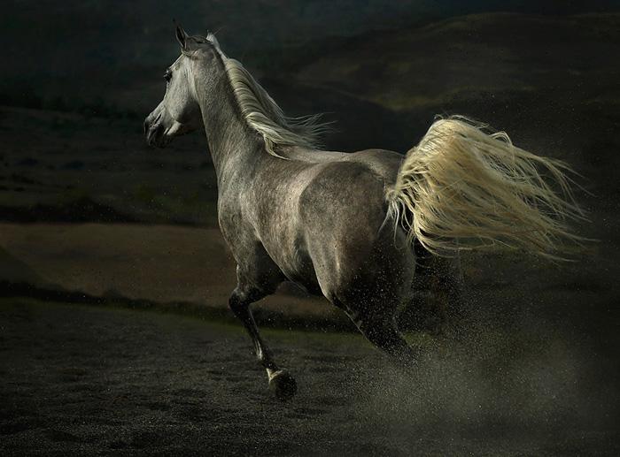 арабские лошади