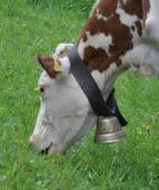 корова в кустах